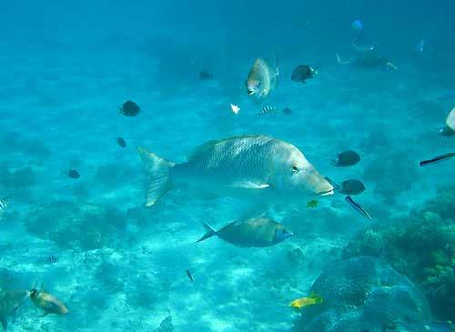 タマンー海の中